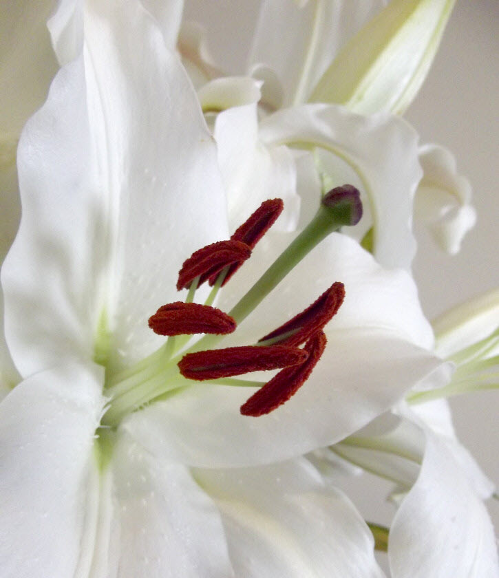 flower memorial of addiction death
